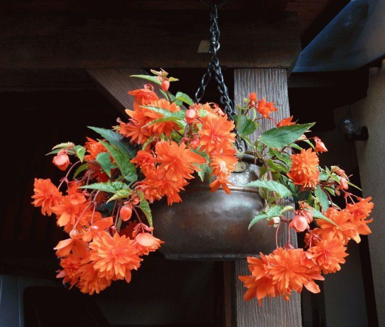 Фото цветов 1