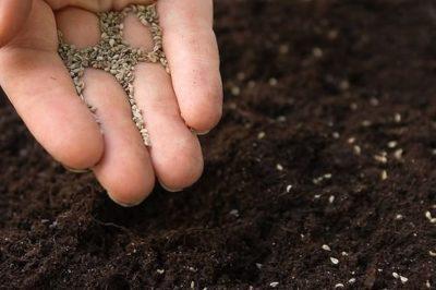 Семенами