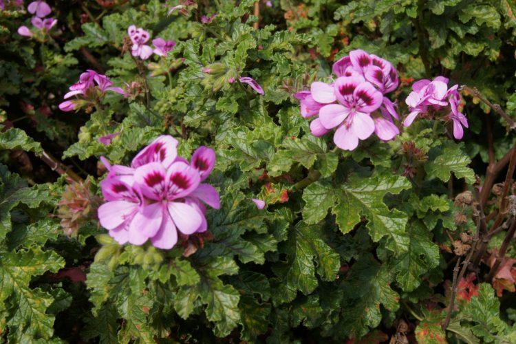 Популярные сорта растения и фото видов