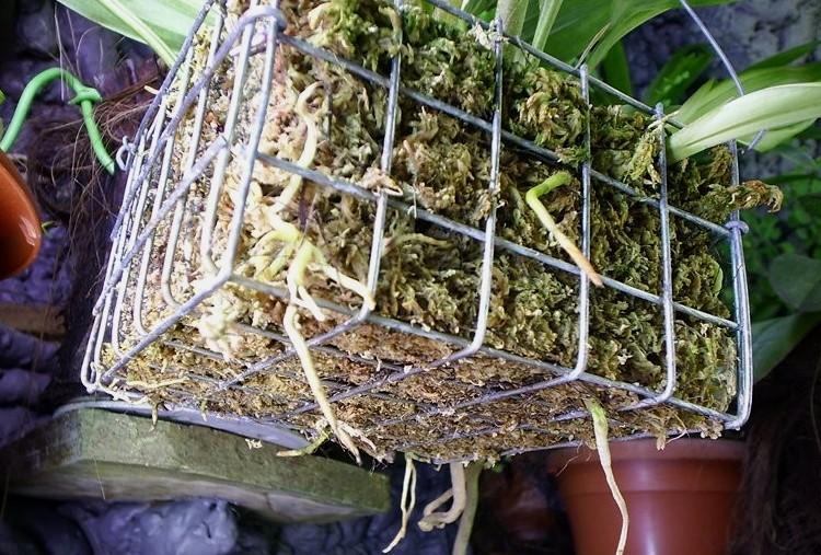 Разновидность и особенности подбора горшков для орхидей