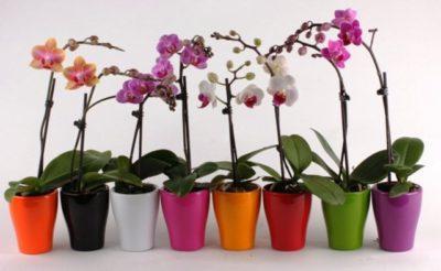 orhideya_89_26173024-400x246.jpg