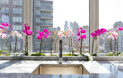 Где лучше выращивать орхидею в домашних условиях