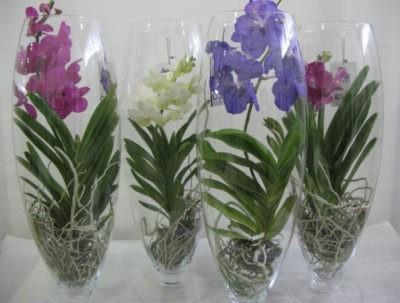 Правильная пересадка орхидей раскладываем все по полочкам