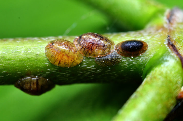 Каланхоэ болезни листьев и лечение