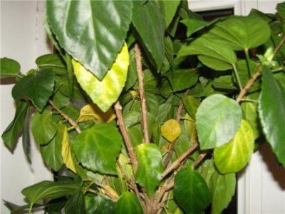 Почему растение поражают недуги?