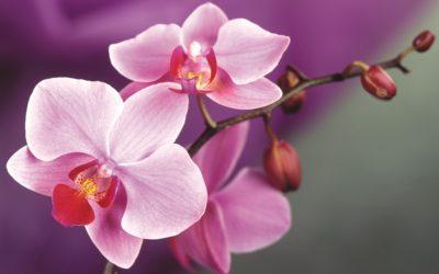orhideya_2_02195907-400x250.jpg