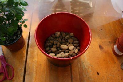 Цветок декабрист как размножить в домашних условиях 39