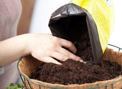 Как посадить хойю