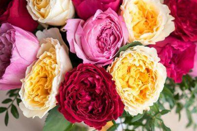 Роза «Бенджамин Бриттен»: особенности выращивания