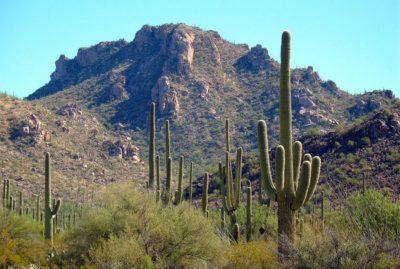 kaktusy_v_pustyne_1_27154115-400x269.jpg
