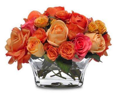 Черенки роз дали листочки что делать дальше