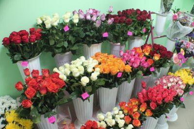 Как правильно покупать и хранить саженцы роз